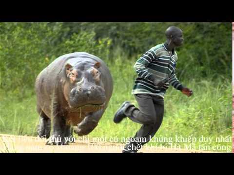 Thế giới động vật   Top 10 loài động vật nguy hiểm nhất trên thế giới