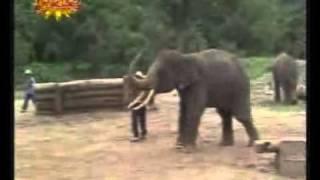 الفيل صديقى