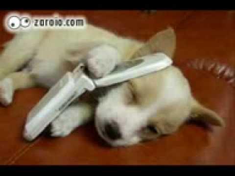 Cachorros Engraçados   Parte2 mpeg4
