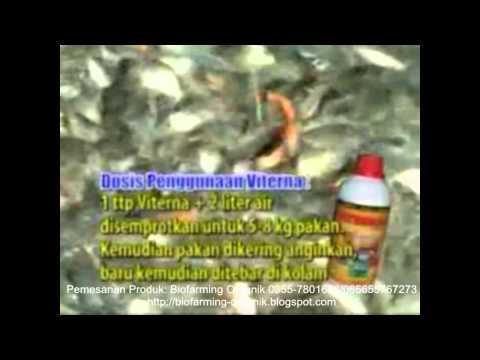 Cara Hebat Tingkatkan Produksi Ikan Mas dengan Produk Organik NASA