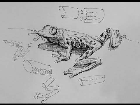 Pen & Ink Drawing Tutorials   How to draw a frog