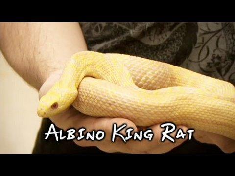 Snake bytes tv lets get it started youtube