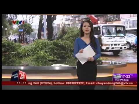 Chuyển động 24h Nói về Việc Chặt Hạ 6700 Cây Xanh ở Hà Nội