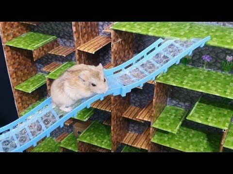 My Funny Pet Hamster in NEW MINECRAFT MAZE - Obstacle Course for Hamster