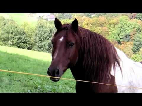 Mare Horse Winking