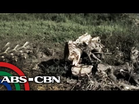 Over 1,000 trees were cut in Pangasinan for road-widening projects