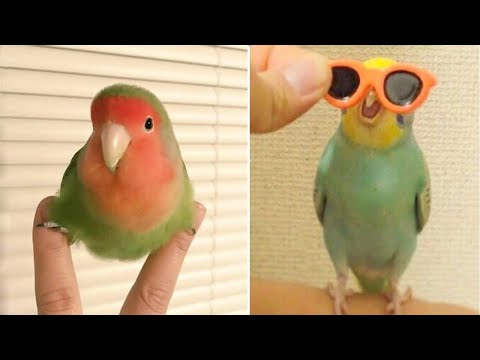 Funny Parrots Videos 🔴 Compilation cute moment of the baby animals - Cutest Parrots 2019 Tik Tok