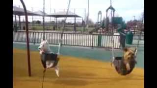 [Man's Best Friend Dogs Swing] Video