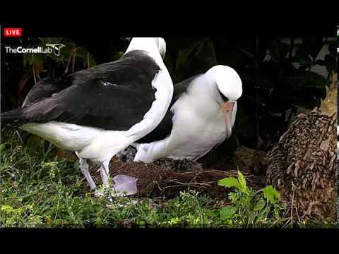 Albatross family and their surroundings