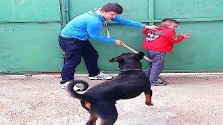 Animales protectores y niños