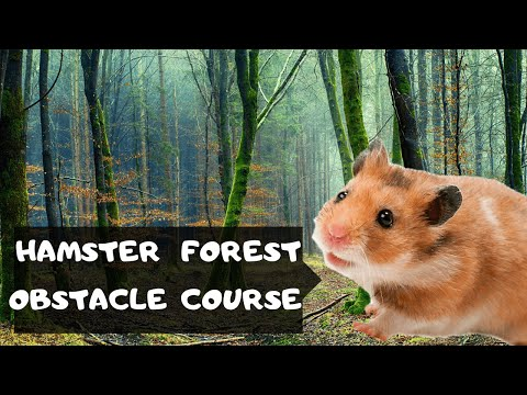 obstacle course for my brave little hamster in the forest