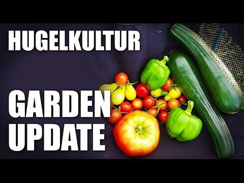 GGC - 62 - Homesteading: Hugelkultur Vegetable Garden Update and Harvests