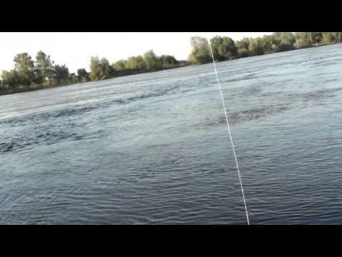 Pescuit oblete la muste artificiale pe Dunare-Sulina iunie 2013