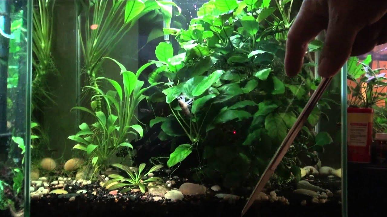 Aquarium Plants For Beginners Youtube
