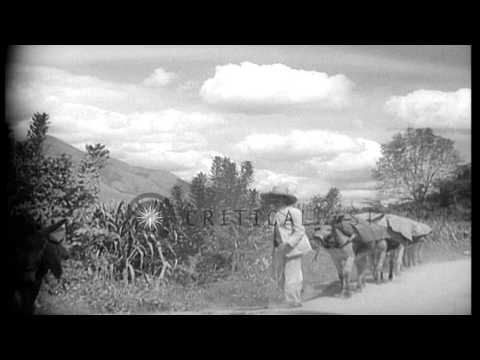 Men lead mules along the side of a road in Caracas, Venezuela. HD Stock Footage