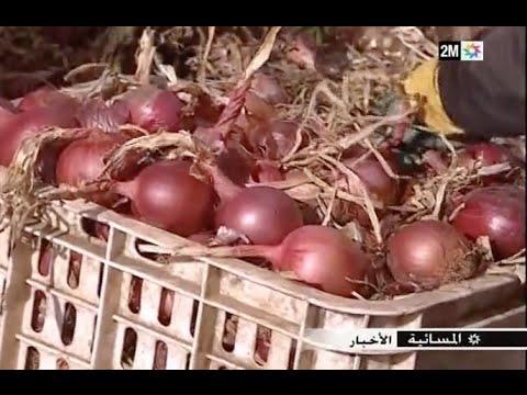 ارتفاع ثمن البصل في السوق