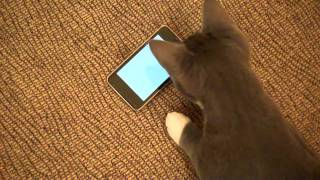Cute Kitten Plays Apps On Apple IPod