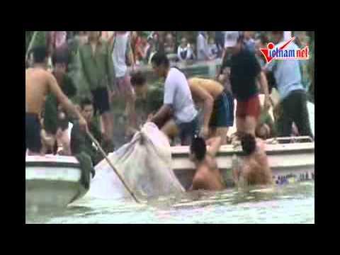 Vây bắt cụ Rùa Hồ Gươm 03042011