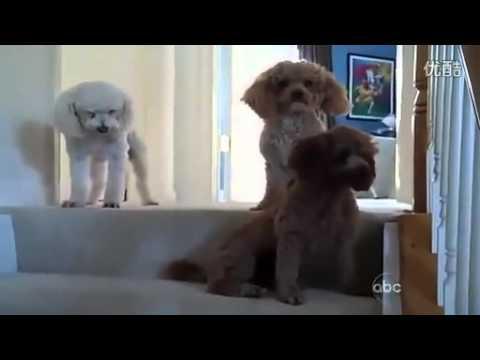 【寵物福利社】- 超會演內心戲的三隻狗~