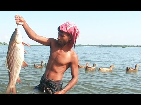 Wow Best Cast Net Fishing Video ! The Most Catch Fishing With Beautiful Natural!