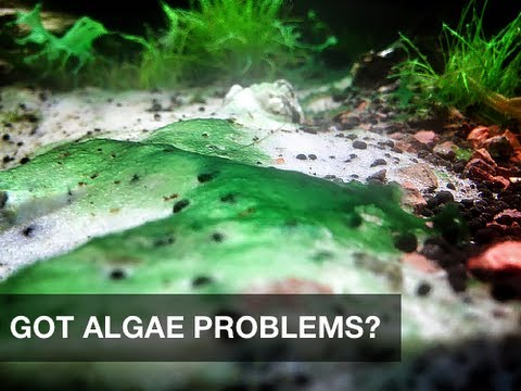 Got algae problems in your aquarium? try this safe and simple solution!