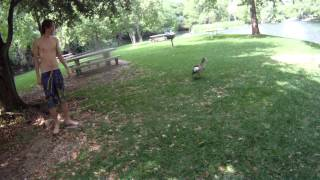 [Duck Attacks(Funny)] Video