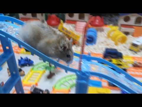 My Funny Pet Hamster in 5-Level Rail PARK Maze - Obstacle Course for Hamster