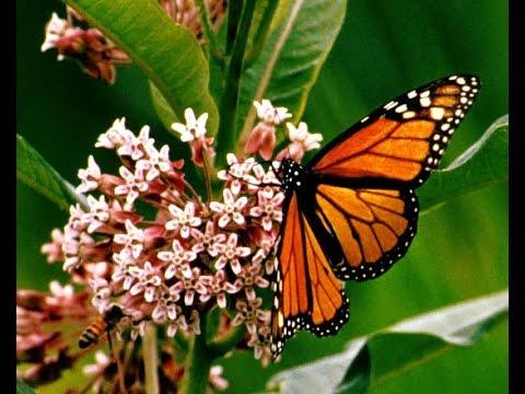 [Karaoke Nhạc sống] Con bướm xuân (Full HD))