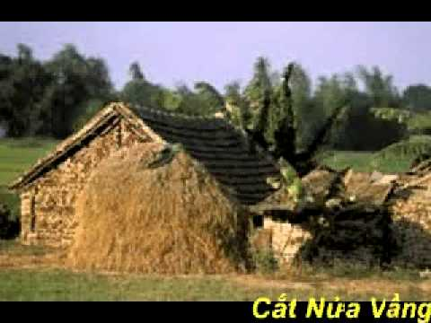 Cat Nua Vang Trang   ANB