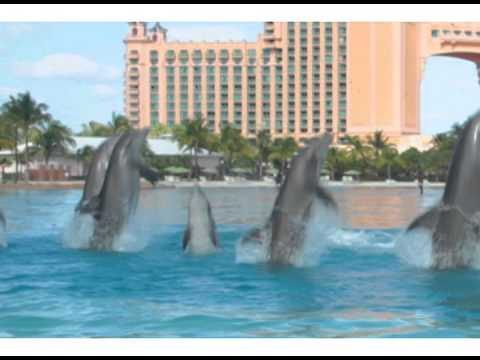 Spring Into Paradise with Dolphins at Atlantis Bahamas