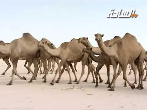 منقية صاحب السمو الأمير فهد بن عبدالله بن محمد بن عبدالرحمن آل سعود (الصفر)