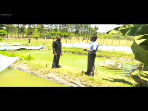 Smart Farm: Ornamental Fish Farming