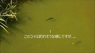 陸っぱり お魚観察