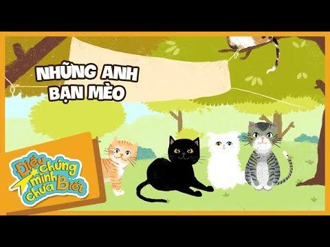 [Điều Chúng Mình Chưa Biết] - Tập 11: Những anh bạn mèo