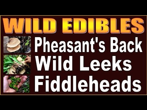WILD EDIBLES.  How To Find Leeks, Fiddleheads and Pheasant's Back Mushrooms.