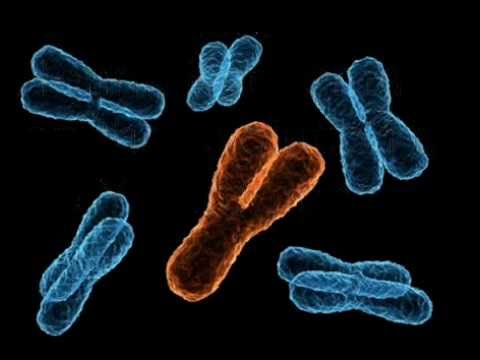 The evolution of the Y chromosome