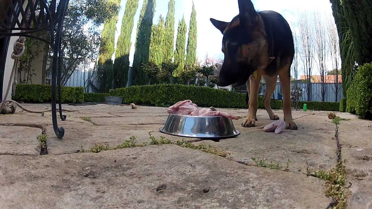 I am vegetarian. Can a german shepherd puppy be on only vegetarion diet and milk?