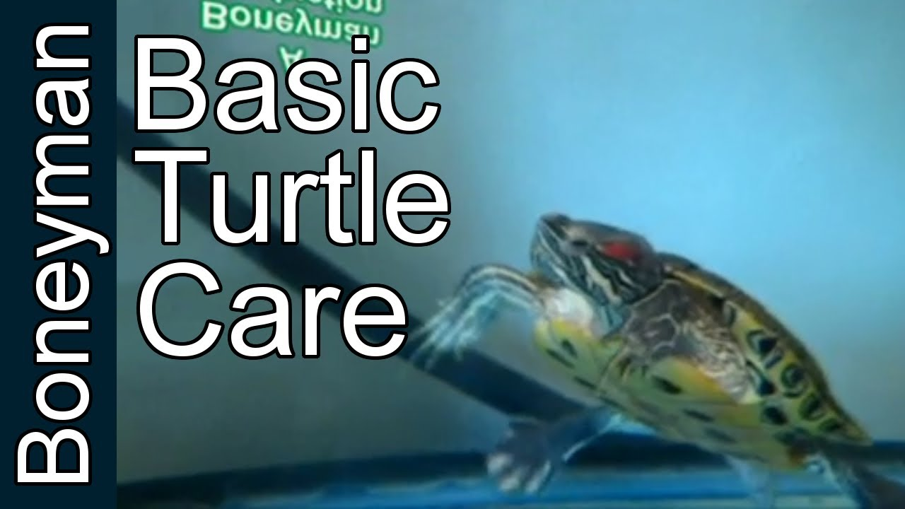 Turtle Care For Beginners: The Basic Enclosure - YouTube