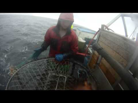 Oregon Commercial Dungeness Crabbing