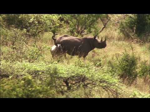 LEWA WILDLIFE CONSERVANCY  PART ONE