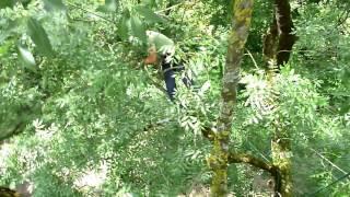 Baumschnitt Video