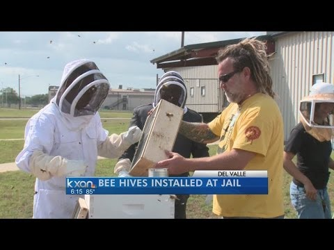 Some Austin jail inmates to learn beekeeping