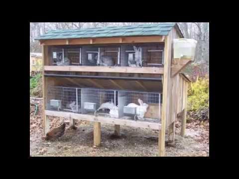 Ternak Kelinci - Kandang Kelinci Sehat dan Nyaman