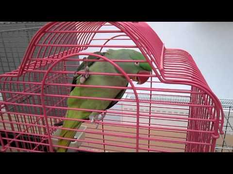 Papagali si canari de la Expoziţia naţională de păsări şi animale mic