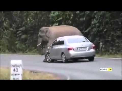 Слон крушит автомобиль