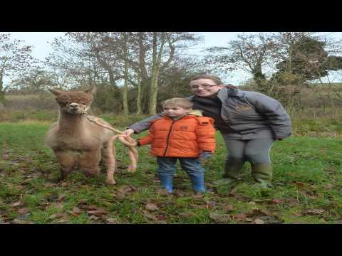 cattanger llama trekking Towcester Northamptonshire