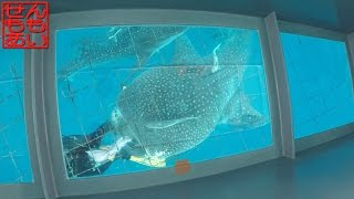 Whale Shark is visited