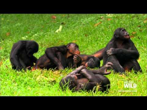 Komik Video MaymunLar Çok Komik Hayvanlar