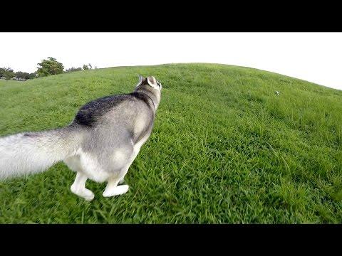 Huge Hurricane Coming? & Gohan Running on Hills!