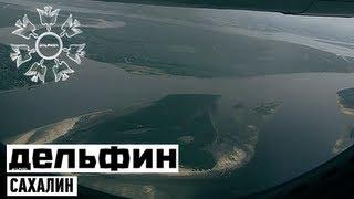 Дельфин - Сахалин